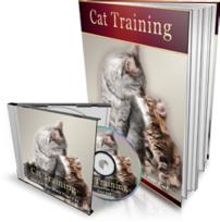 CatTraining-MRR